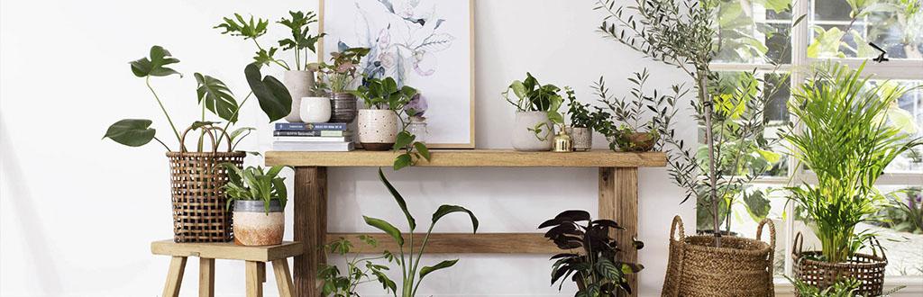 plantas-de-casa-que-mejoran-la-calidad-del-aire-interior